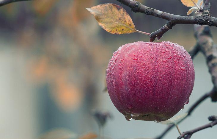 可口好處多的蘋果