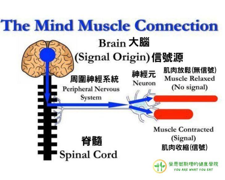 肌肉感受度介紹圖